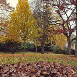 Couleurs d'automne 2017