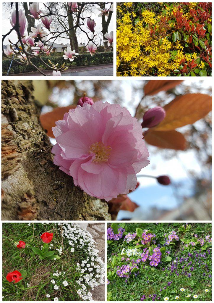 printemps-fleurs-des-hameau