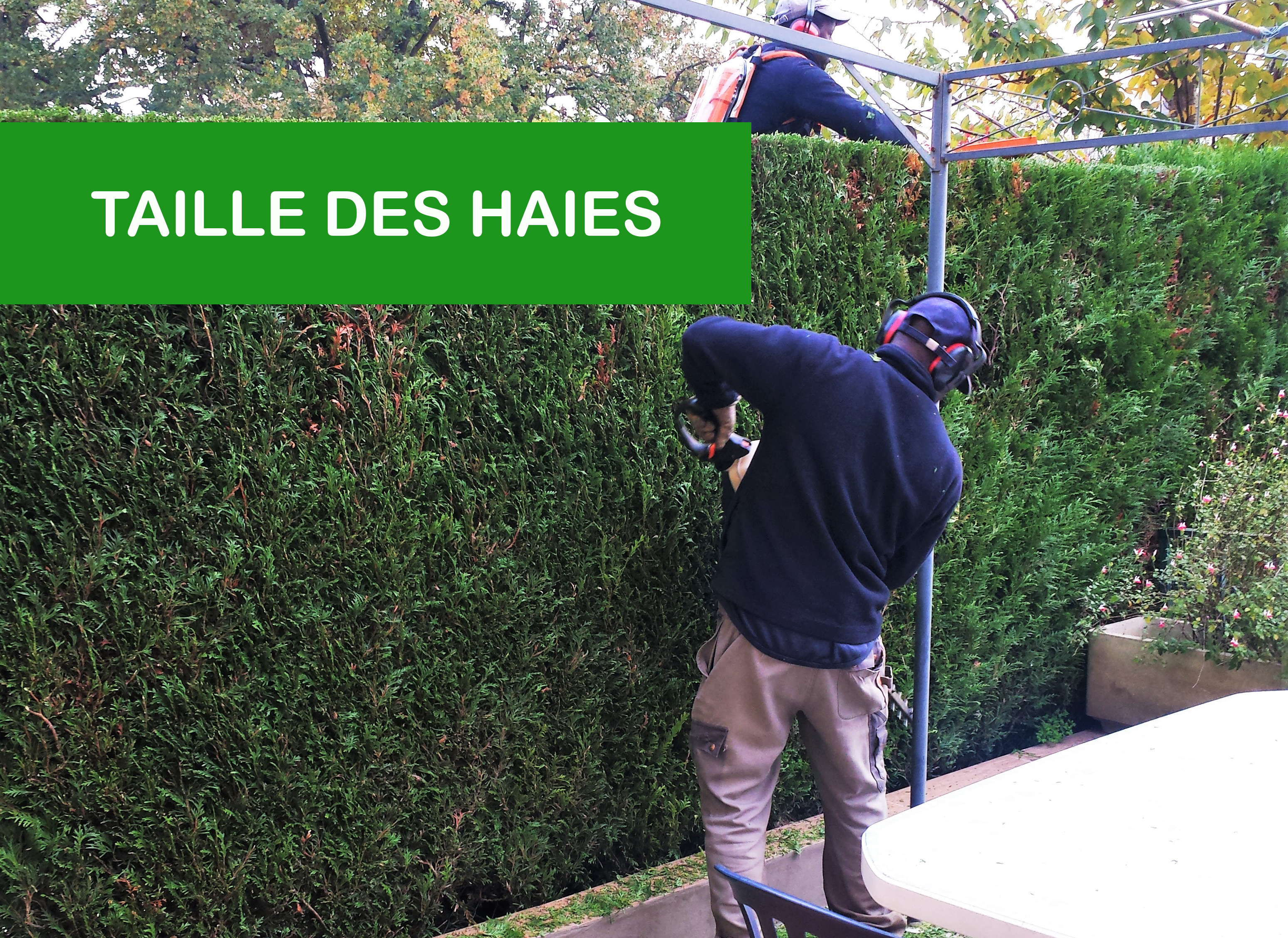 2019-05_taille-haie-interieure100258