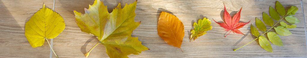 bandeau feuilles
